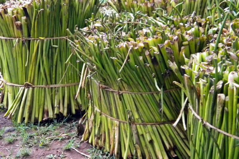 process management of water hyacinth